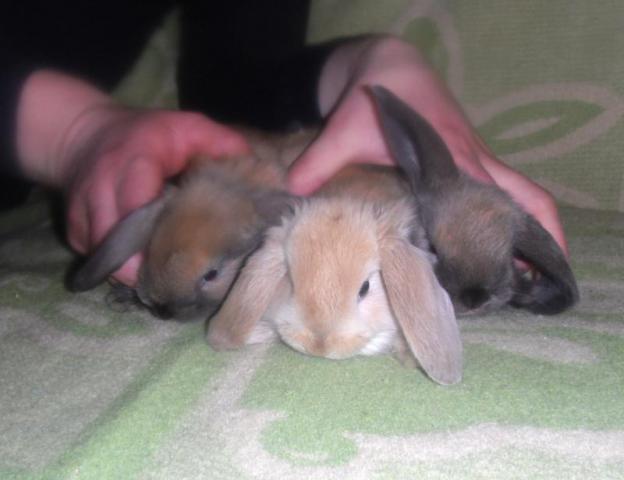 Из рук в руки домашние животные доска объявлений подать объявление знакомство бесплатно